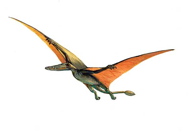Картинки по запросу Птерозавры