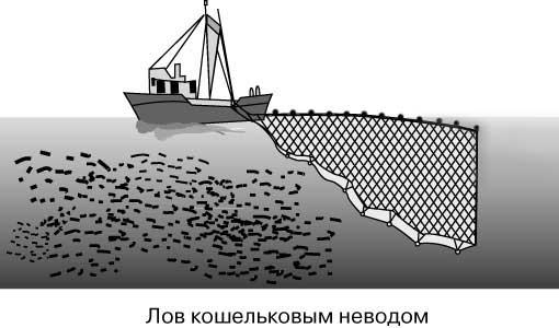Video Related Промывка невода для кошельковой ловли рыбы. - 7Seil