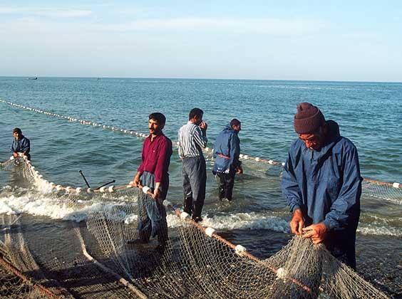 рыболовная ribbed