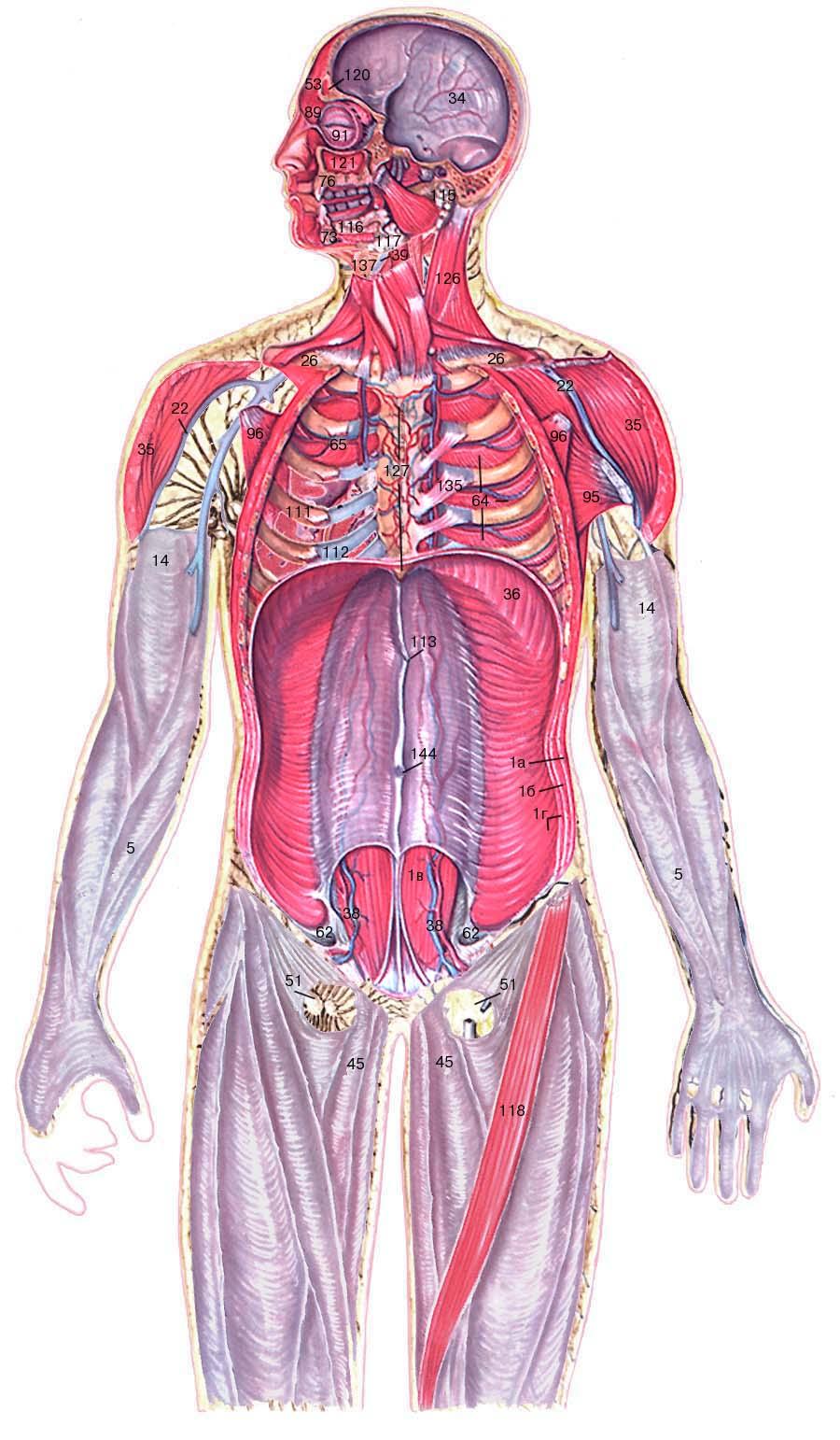 фото биология человека