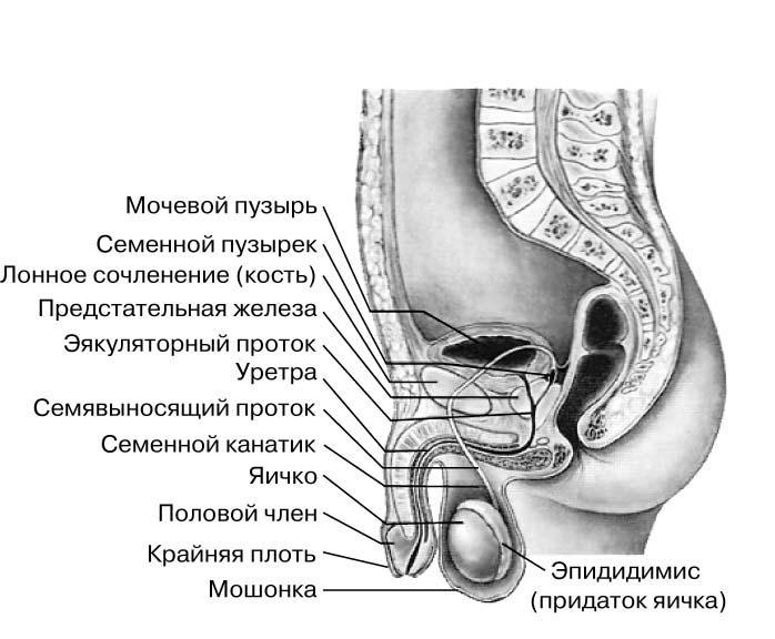 Показать женские половые органы