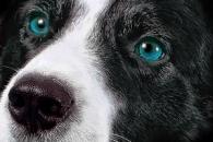 Собачьи тайны