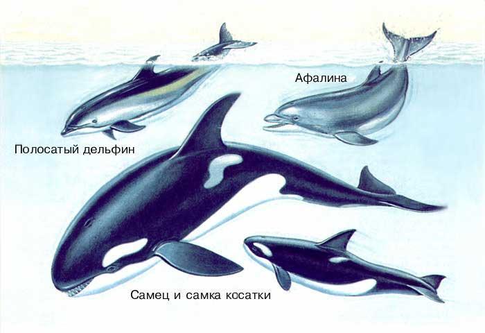 дельфины виды