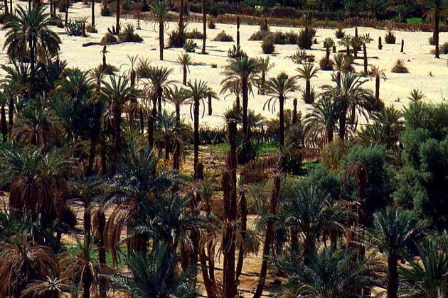 IGDA/Baldizzone ОАЗИС в пустыне Сахара.